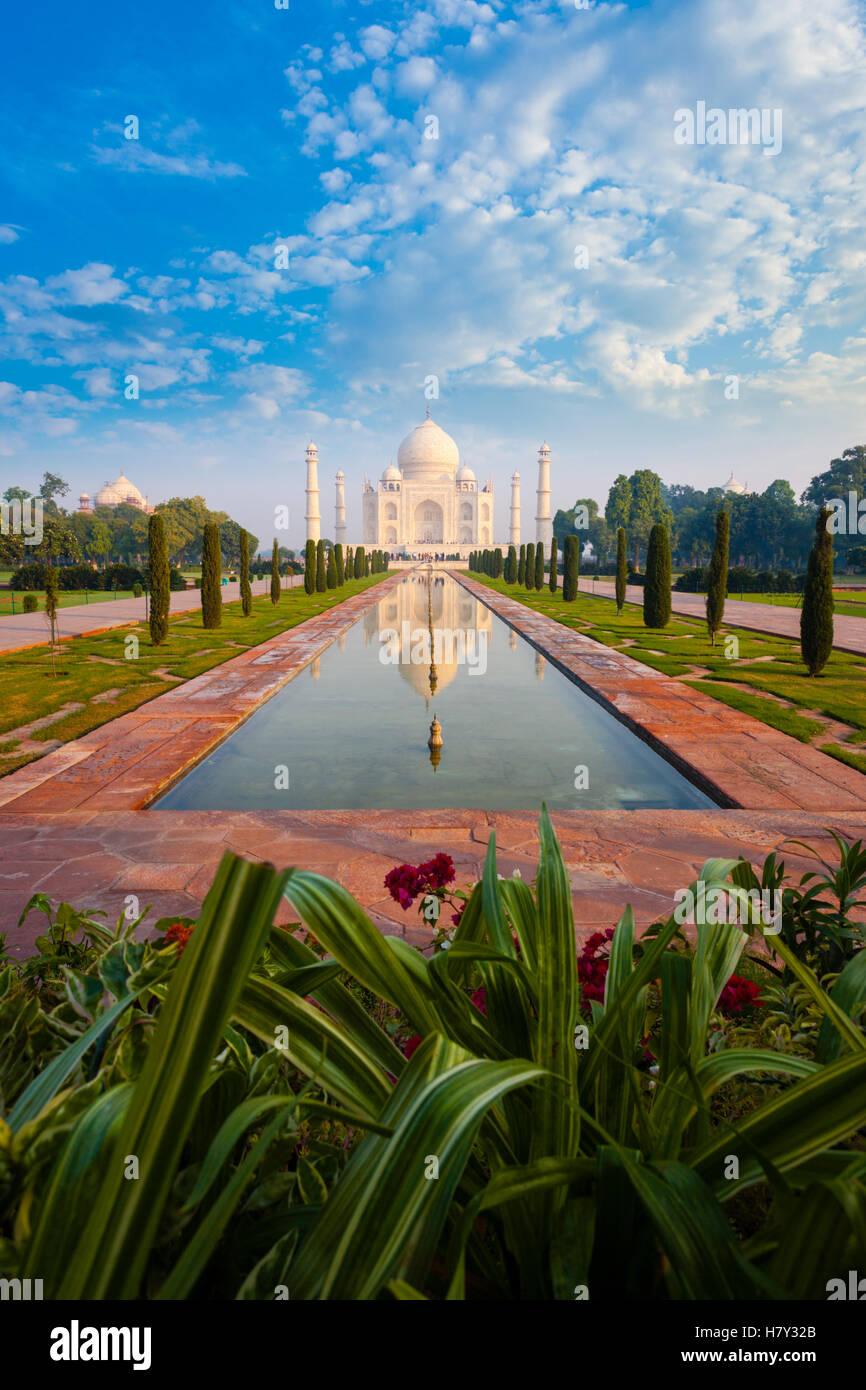 Pflanze Vordergrund im leeren Taj Mahal reflektiert vor Rasen Garten Brunnen in Agra, Indien an einem strahlend Stockbild