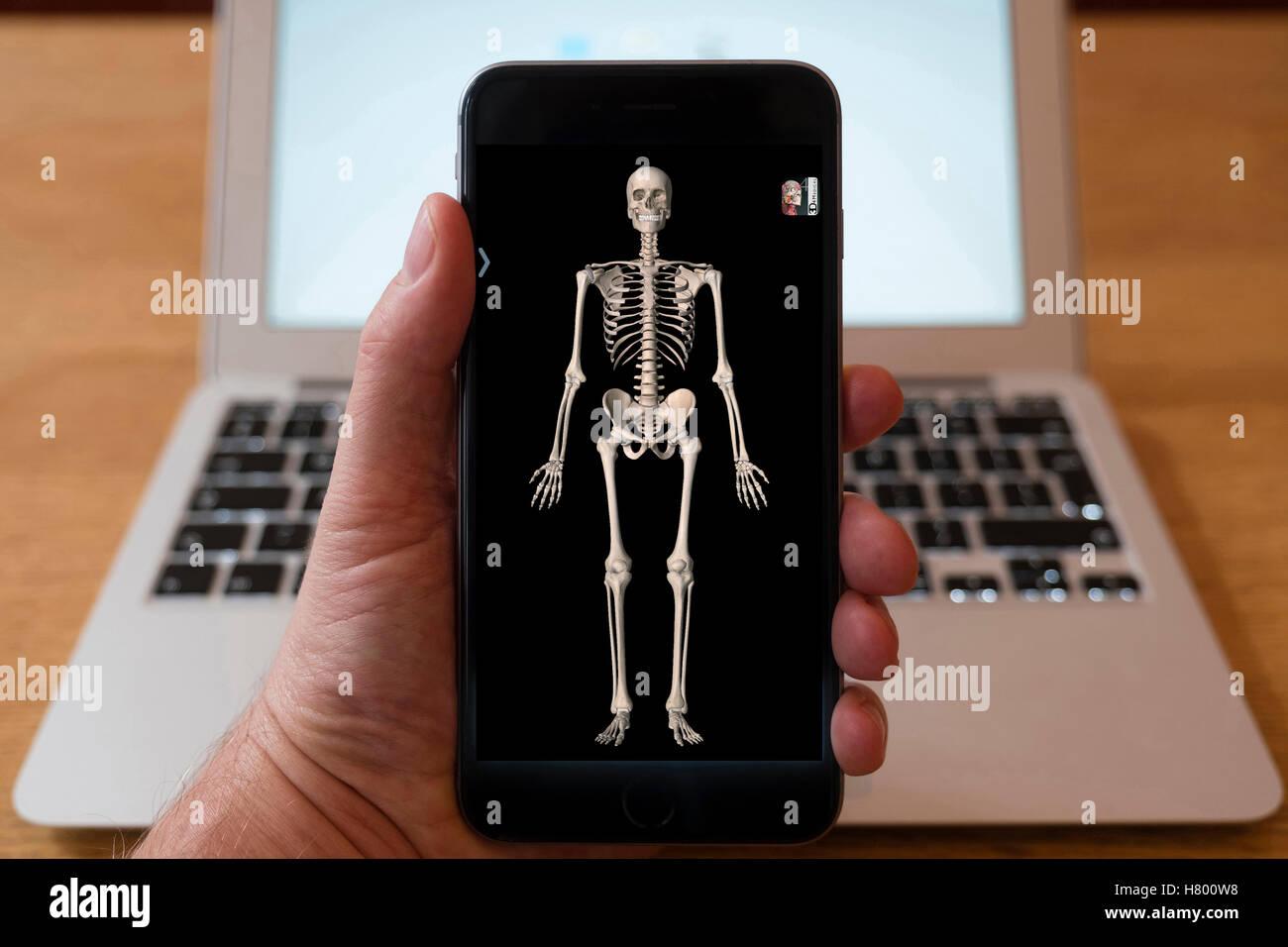 Mit iPhone Smartphone zum 3D Bild des menschlichen Skeletts aus Anatomie medizinische Ausbildung app anzeigen Stockbild