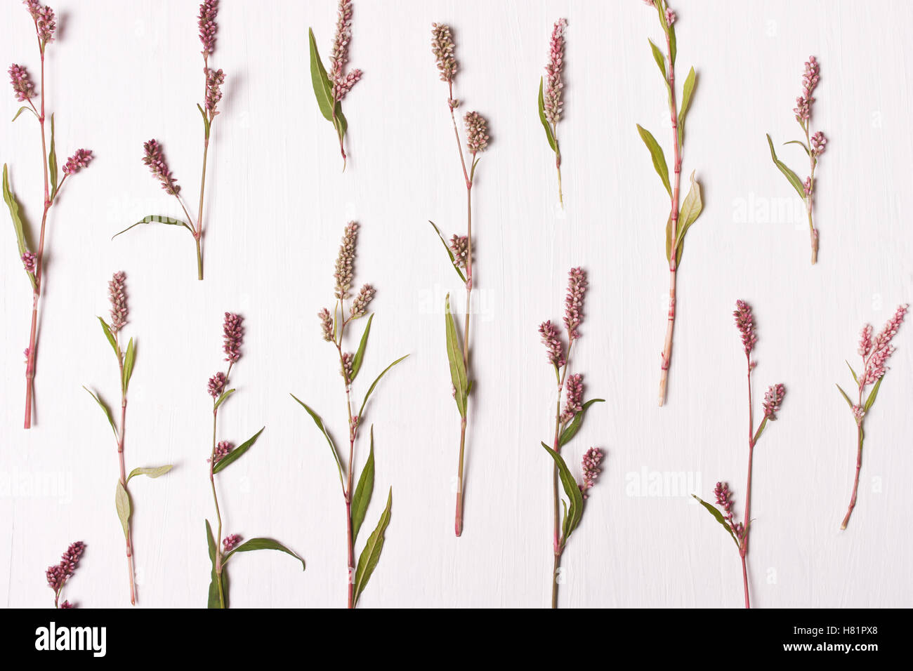 Rosa Blumenmuster. Flach legen, Top Aussicht. Natur-Konzept. Stockbild