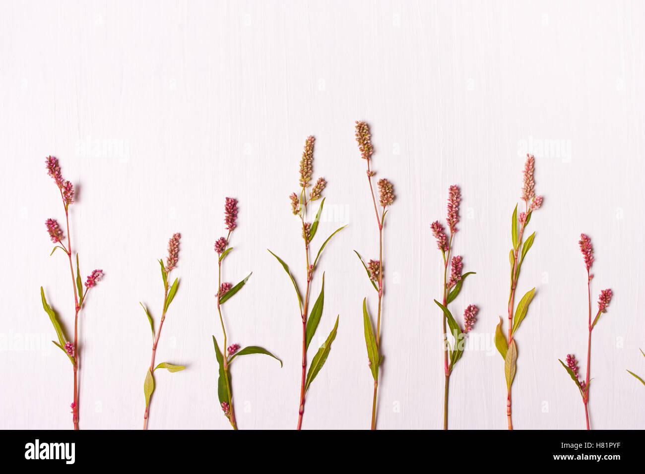 Blumenmuster. Flach legen, Top Aussicht. Natur-Konzept. Stockbild