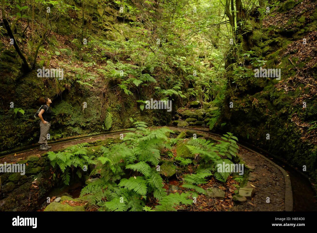 Junge weibliche Wanderer auf der Suche in den Lorbeerwald bei einem Spaziergang entlang der Levada Dos Cedros, Madeira, Stockbild