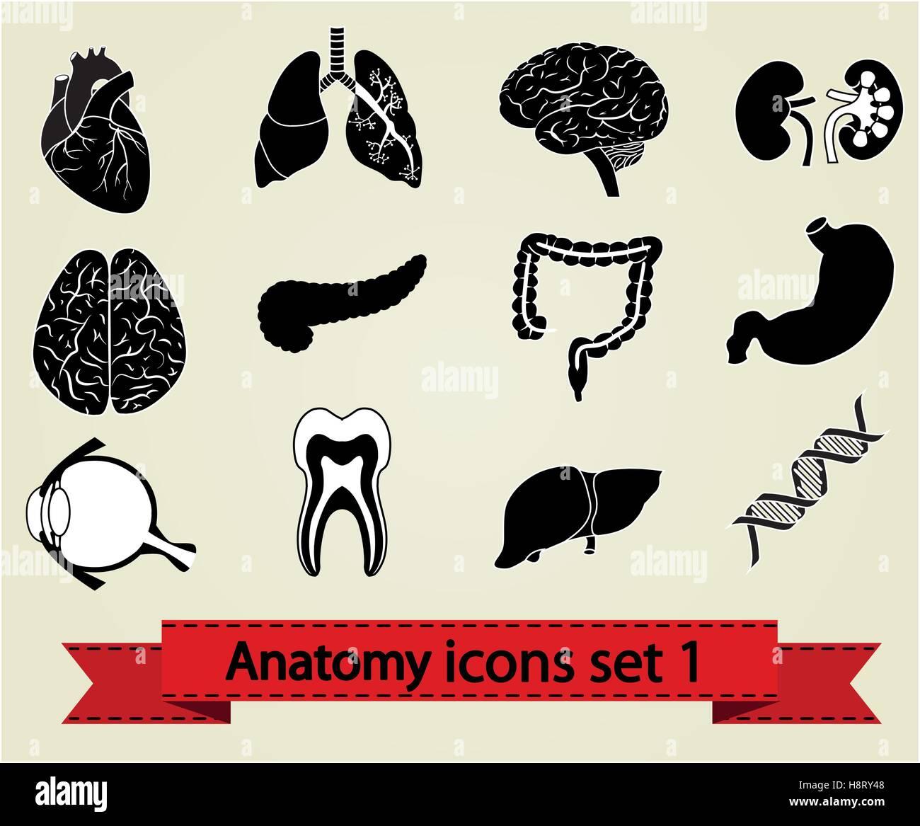 Menschliche Anatomie Symbole Teile: Gehirn, Leber, Herz, Niere ...