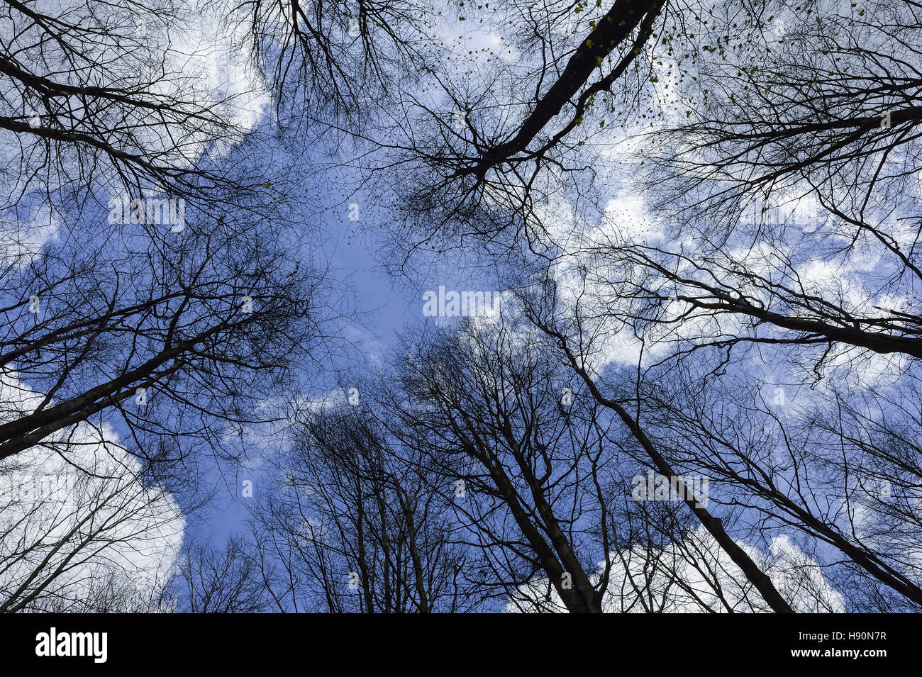 winter trees treetops stockfotos winter trees treetops bilder alamy. Black Bedroom Furniture Sets. Home Design Ideas