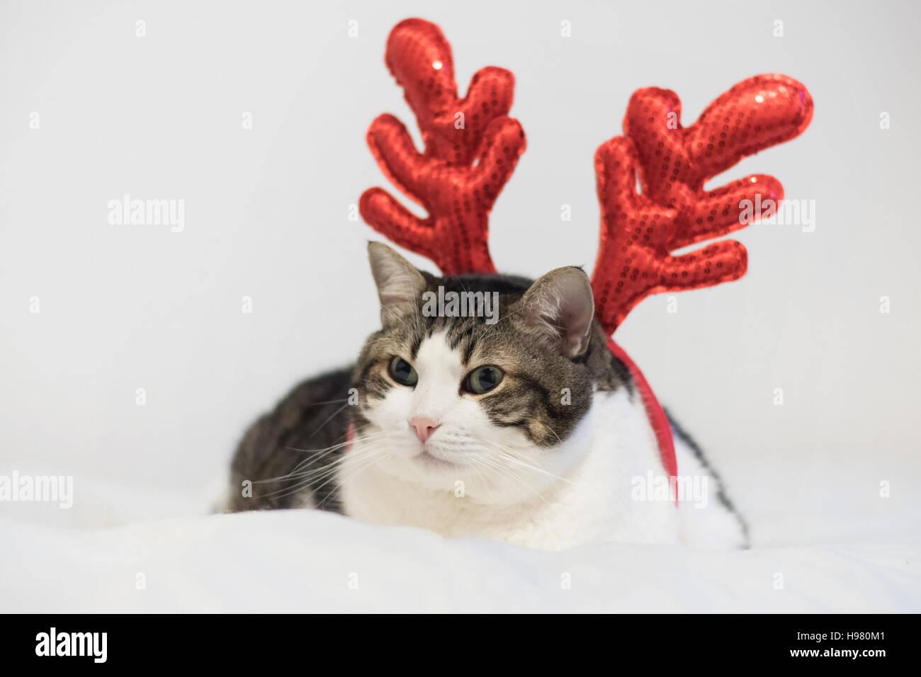 Lustige Weihnachten Rudolph Rentier Katze, liegend auf einer Decke ...