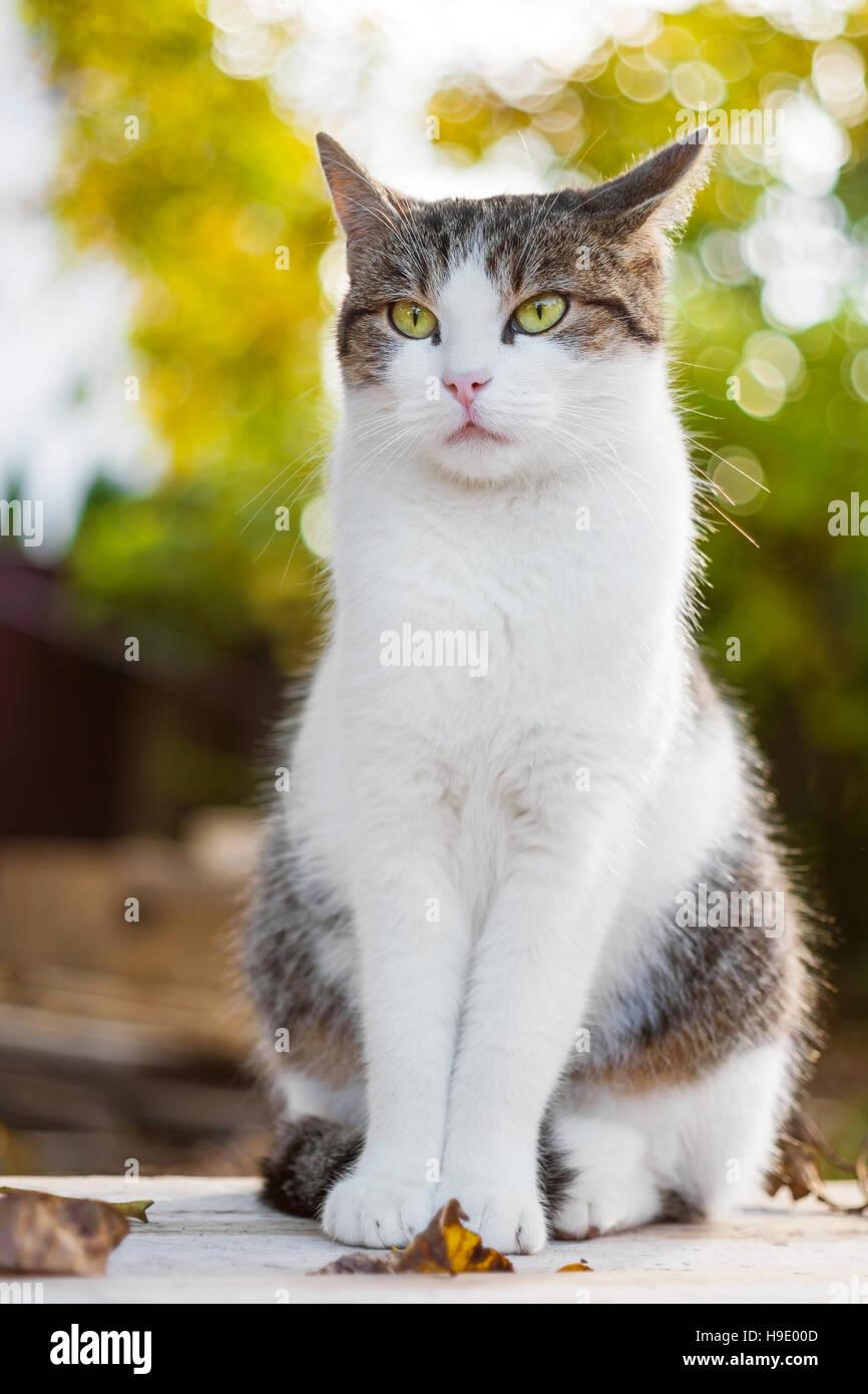 Angst Katze mit Laub im Herbst Stockbild