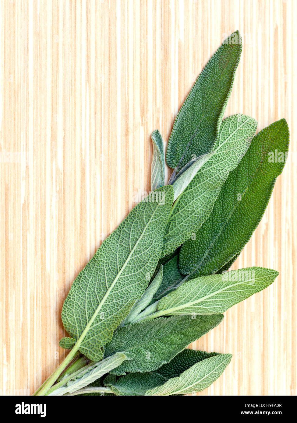 Alternative mediterrane Heilpflanzen Salvia Officinalis oder Stockbild