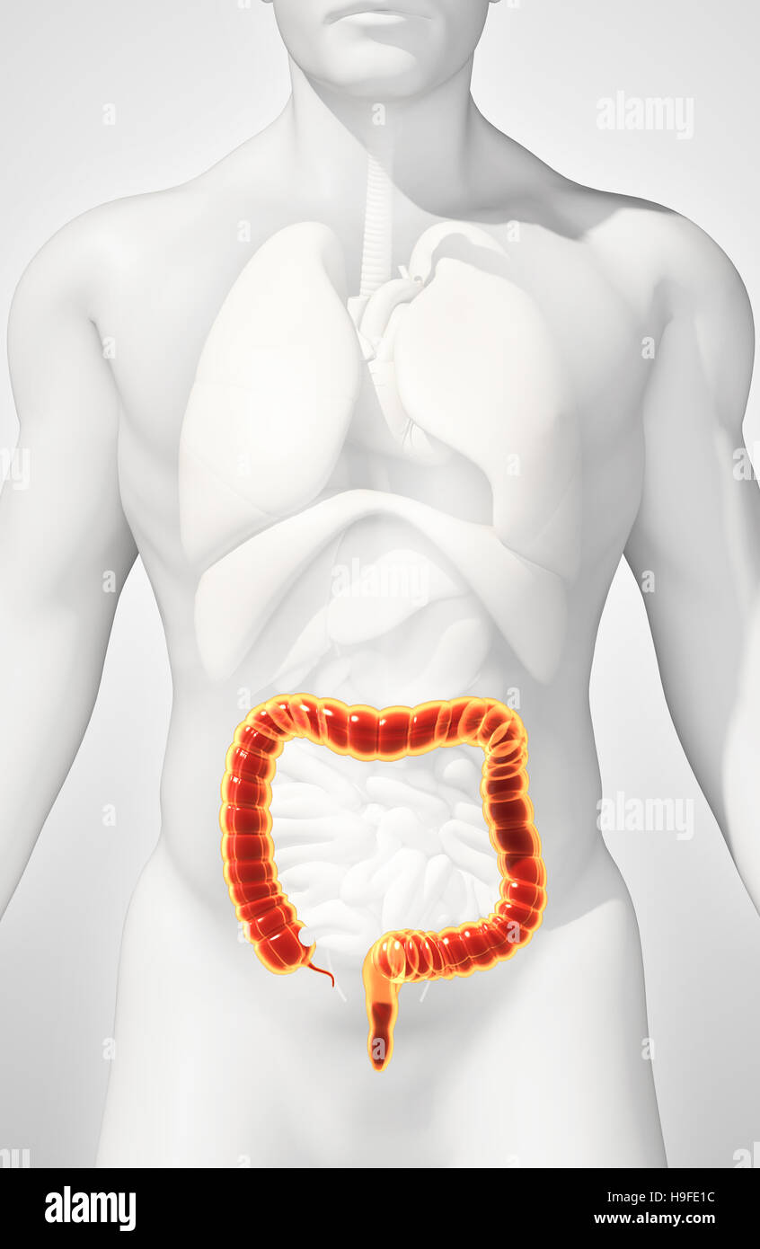 Berühmt Verdauungssystem Anatomie Des Menschen Zeitgenössisch ...