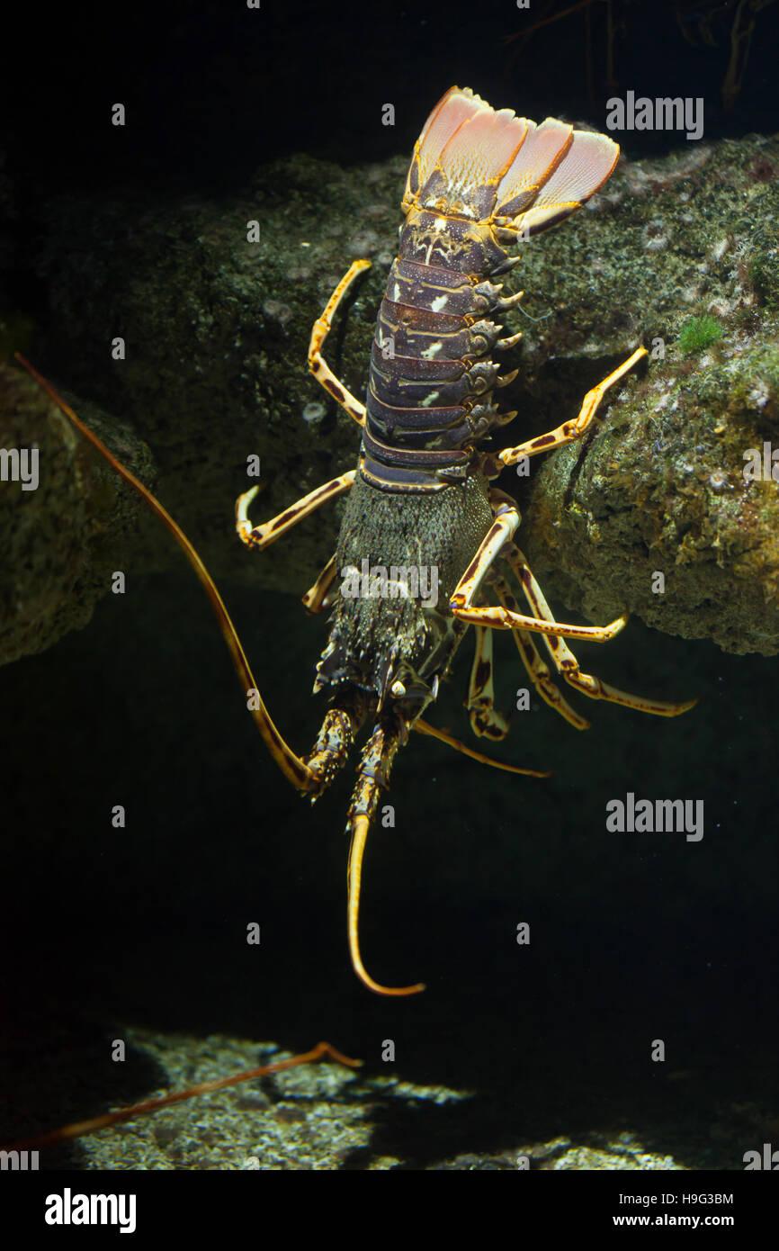 Malacostraca Europe Stockfotos & Malacostraca Europe Bilder - Alamy