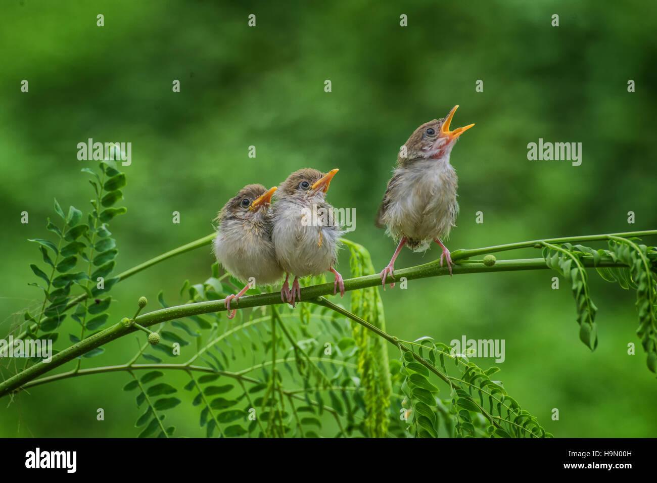 Singing bird stockfotos bilder alamy