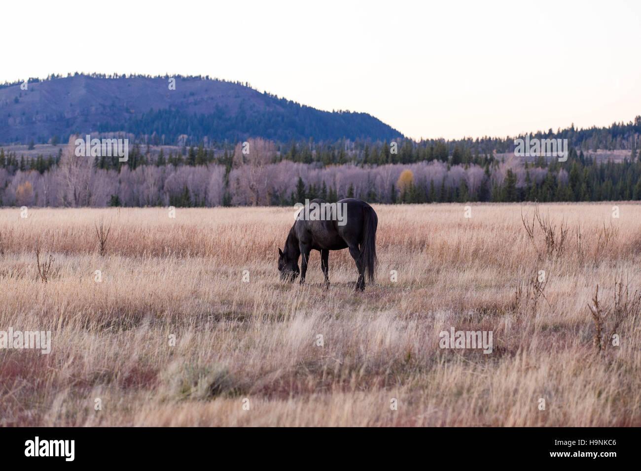 Pferd auf den Grand Teton National Park in Dämmerungen eingereichten Stockbild
