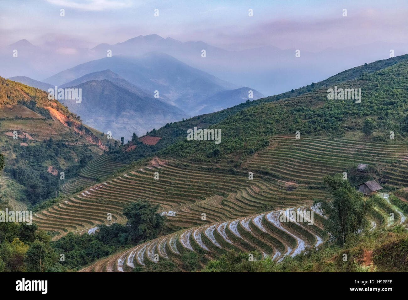 Reis Terrassen, Lao Chai, Sapa, Vietnam, Asien Stockbild