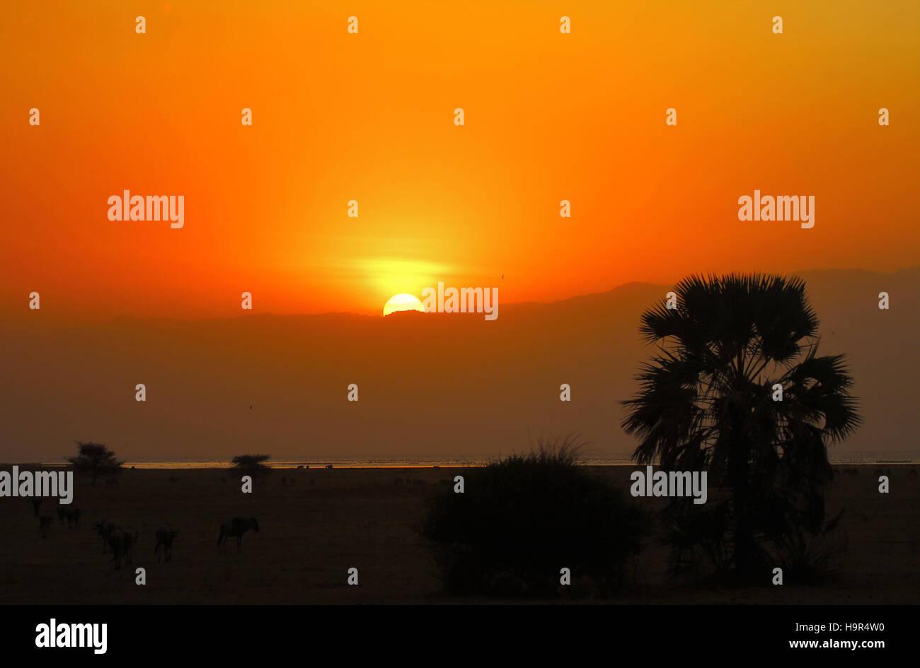 Sonnenuntergang über den Ebenen der Serengeti in Afrika. Stockbild