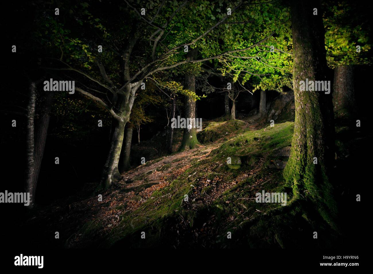 Ein dunkles Holz in der Nacht. Stockbild