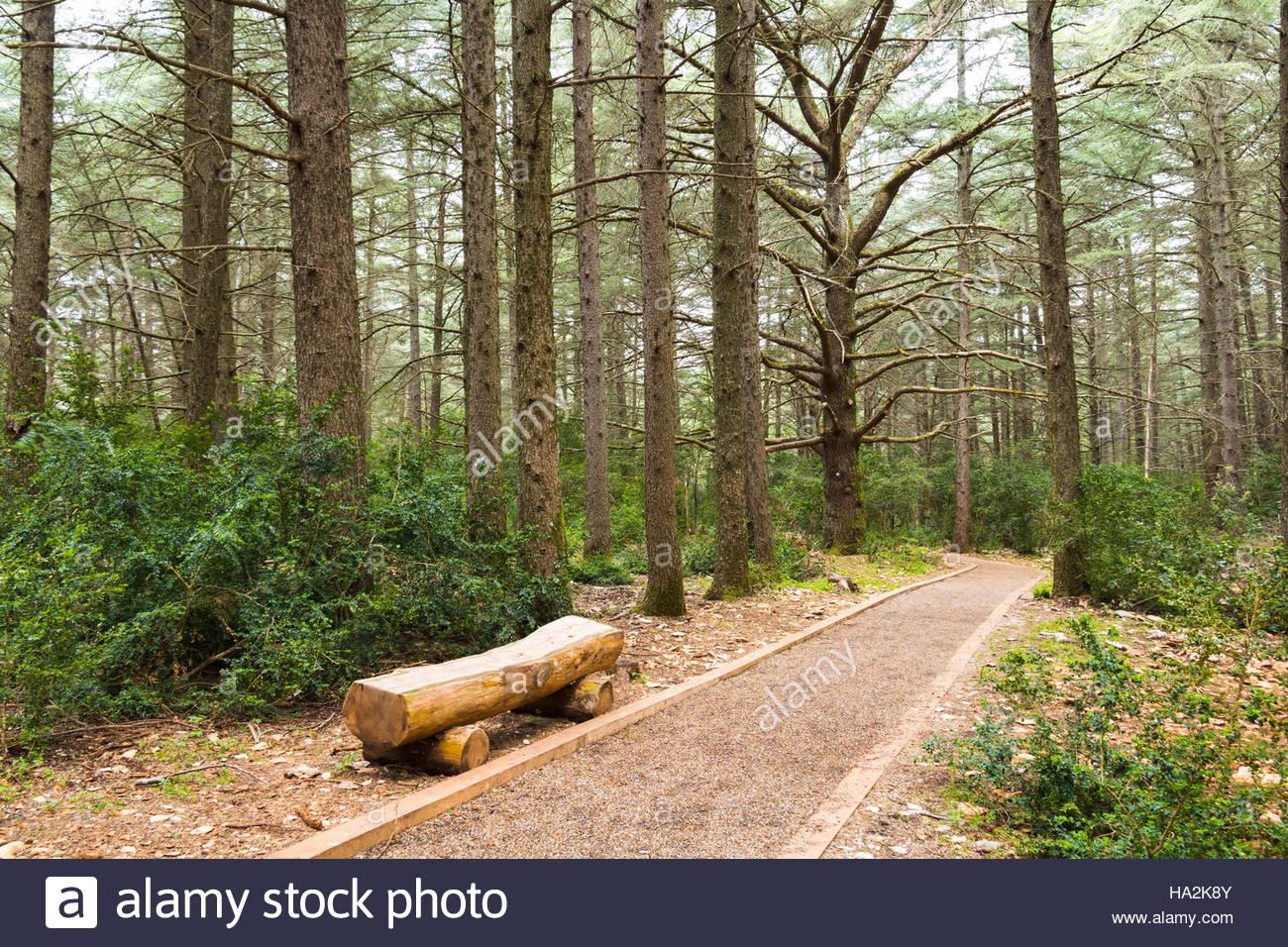 Nachhaltigen Wald alte Zeder Wald Frankreich abstraktes Bild Wald Bereich französische Provence gruselig Bäume Stockbild