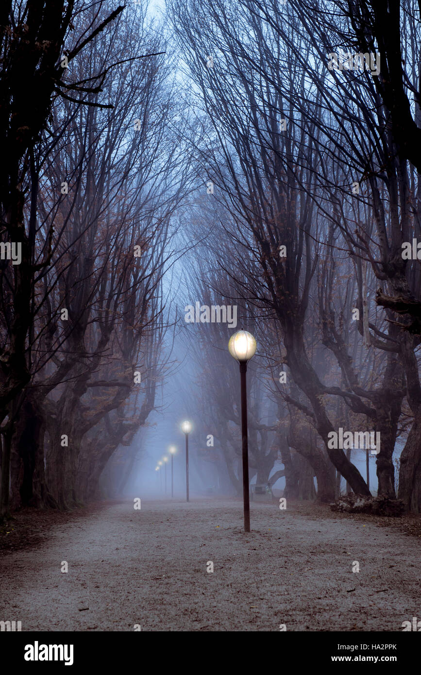Central Park Hainbuche Baum Gasse im Nebel mit beleuchteten Laternen, finsteren und geheimnisvollen Gefühl Stockbild