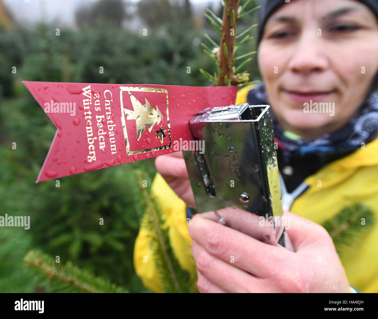 Ursprung Weihnachtsbaum.Karlsruhe Deutschland 18 November 2016 Alexandra Pallmann