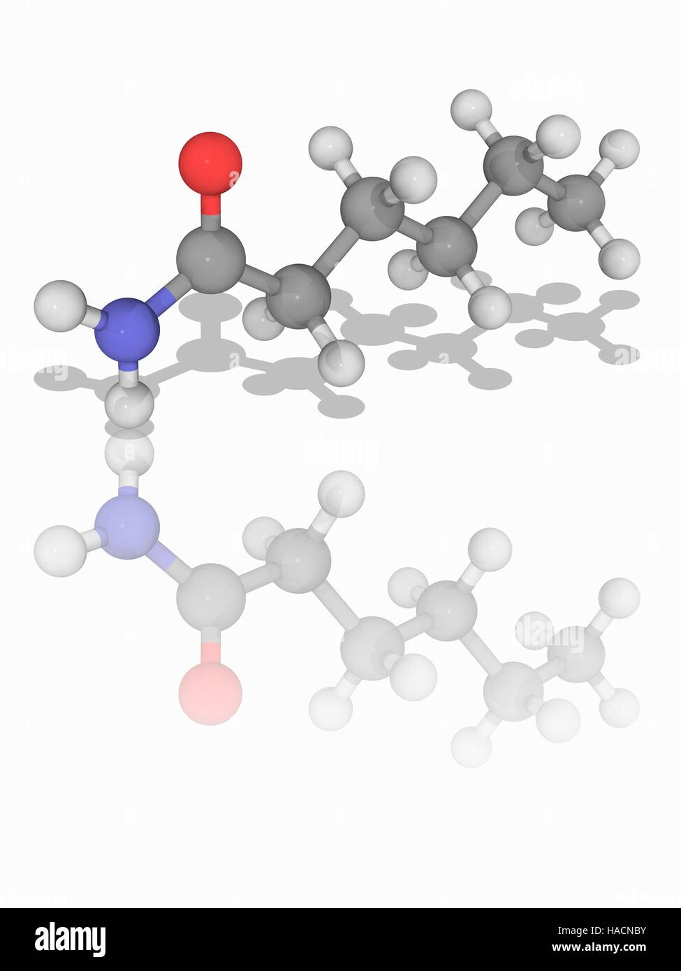 Hexanamide Molekülmodell Der Organischen Verbindung Und