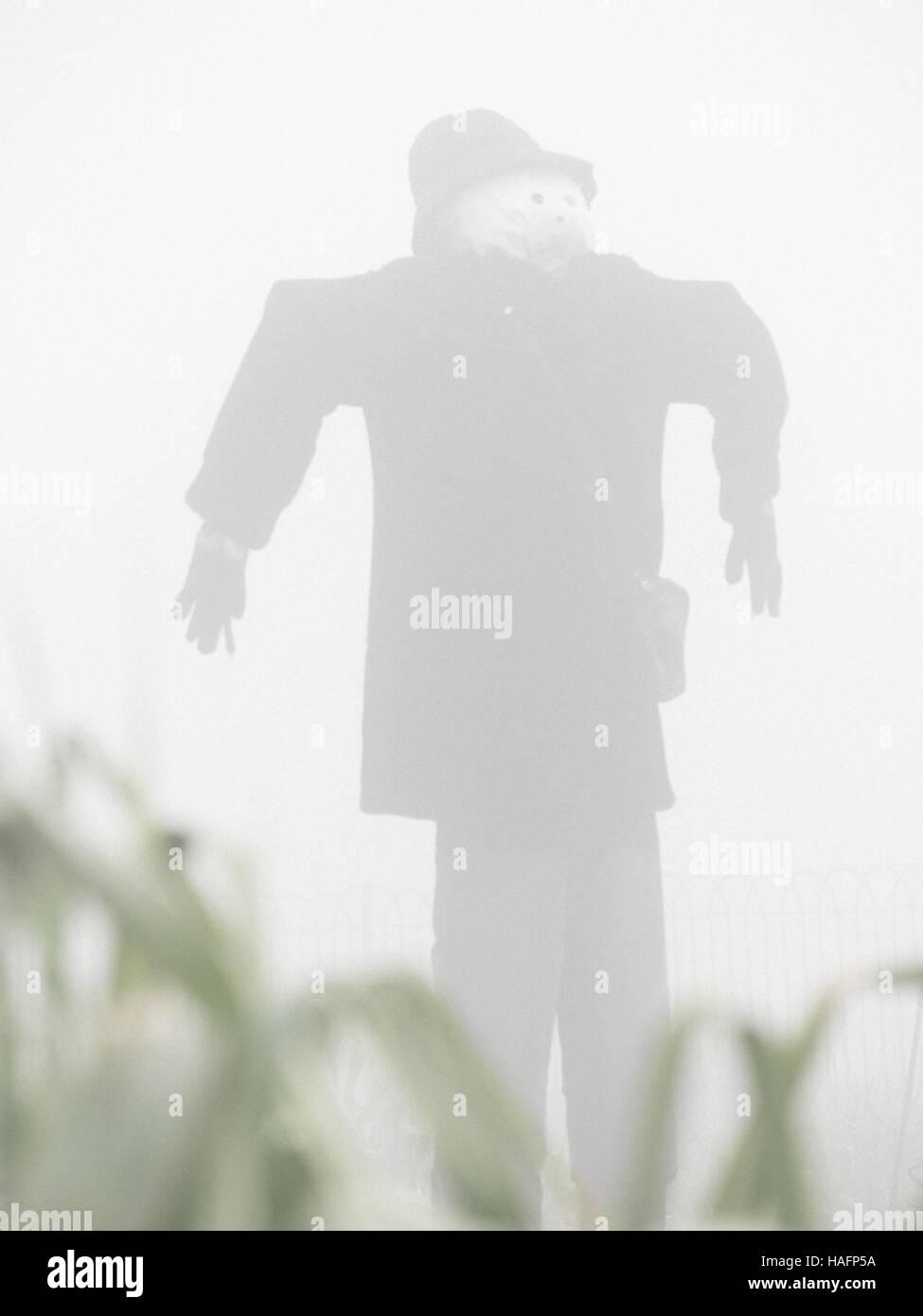 Vogelscheuche im Nebel an einem nebligen Morgen Stockfoto