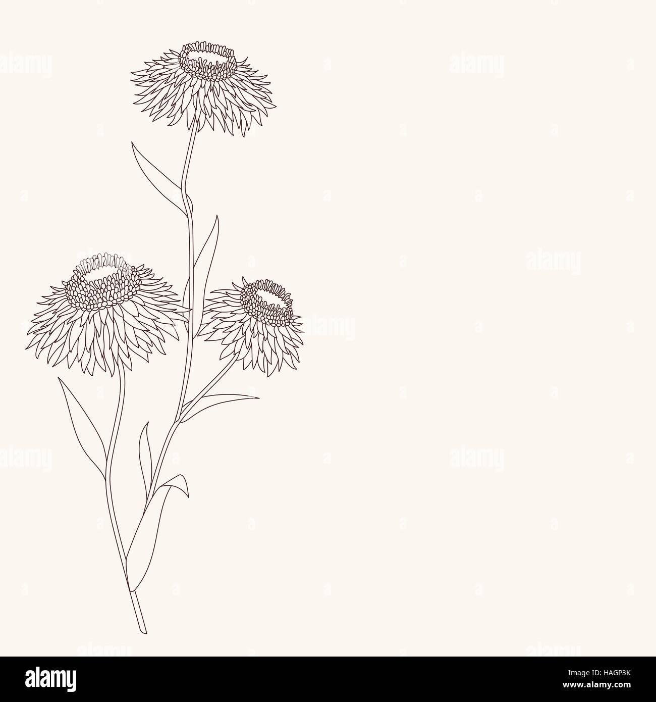 lineare blume zeichnen detaillierte vektor illustration. Black Bedroom Furniture Sets. Home Design Ideas