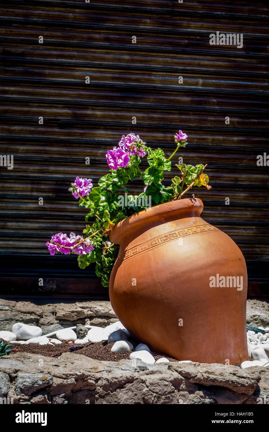 großer blumentopf vor haus auf gran canaria, spanien stockfoto, bild