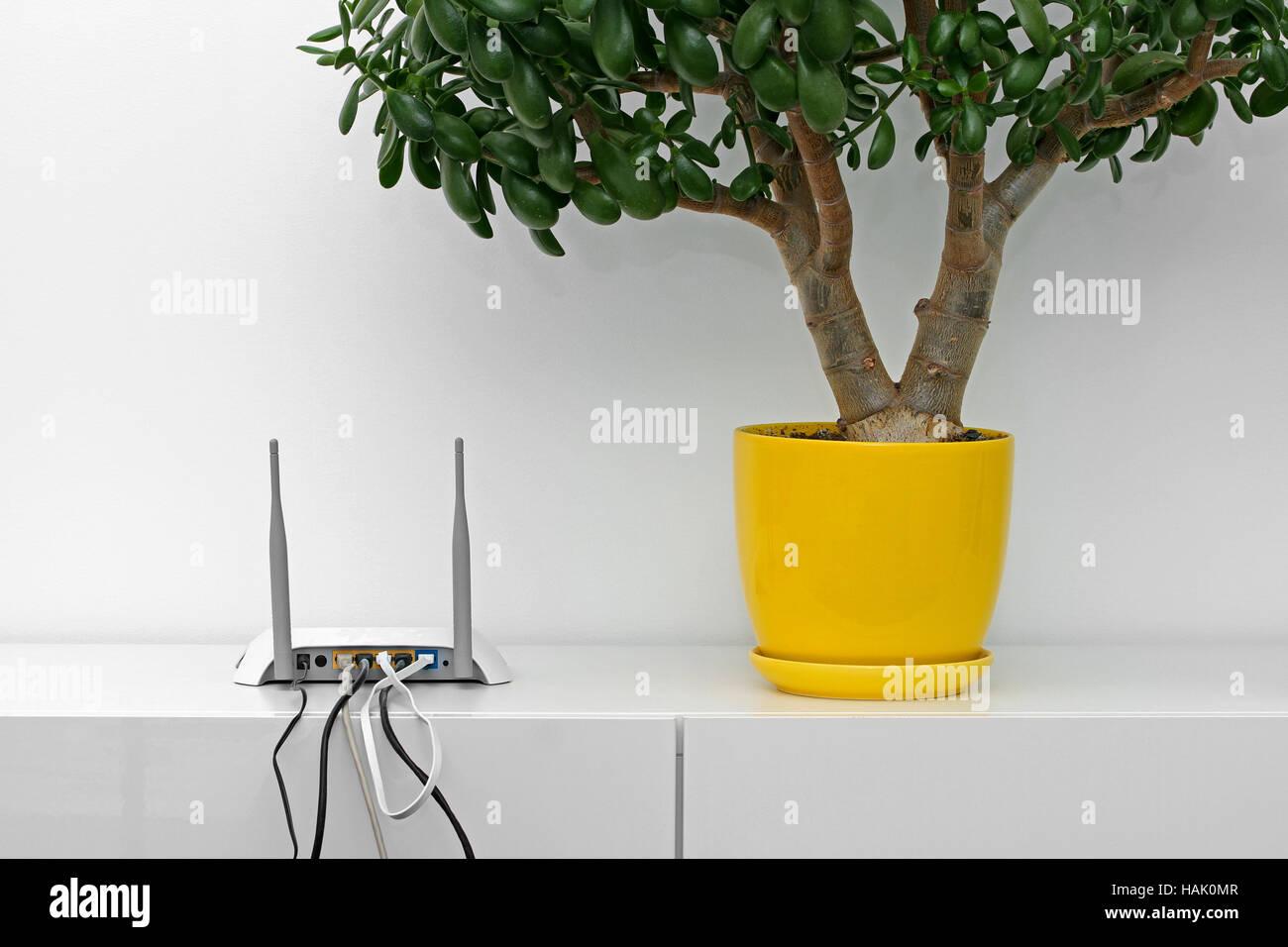 d546c2d1ef90a3 Internet-Router und Blume Topf auf weißen Regal im hellen Innenraum ...