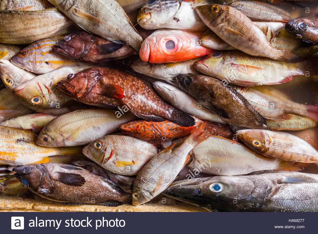 Meeresfrüchte auf Eis am Fischmarkt Stockbild
