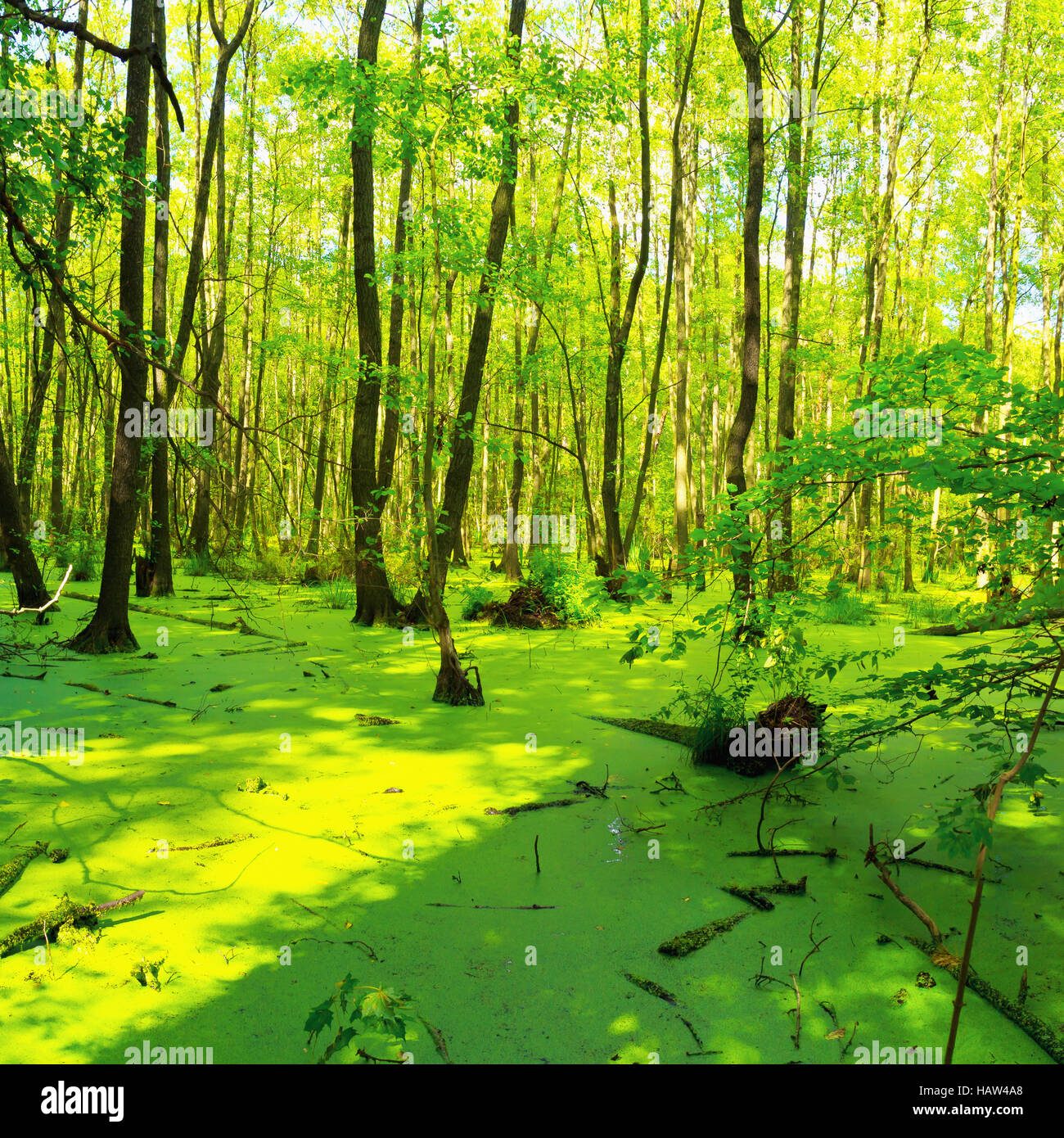 Sumpf - Briesetal in Birkenwerder Stockbild