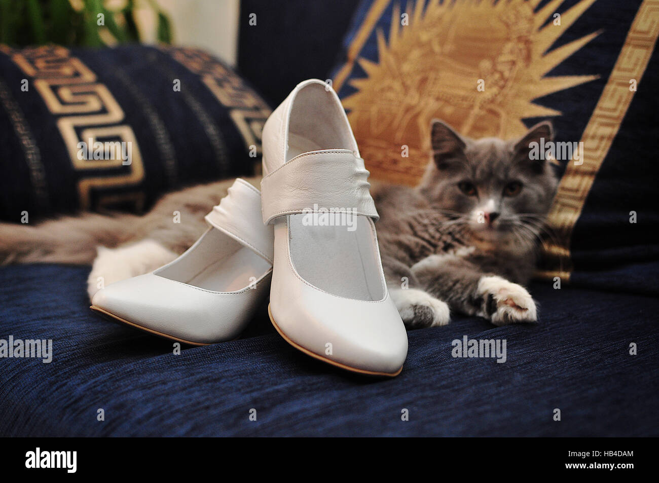 Lustige Graue Katze Sah Von Hochzeitsschuhe Stockfoto Bild