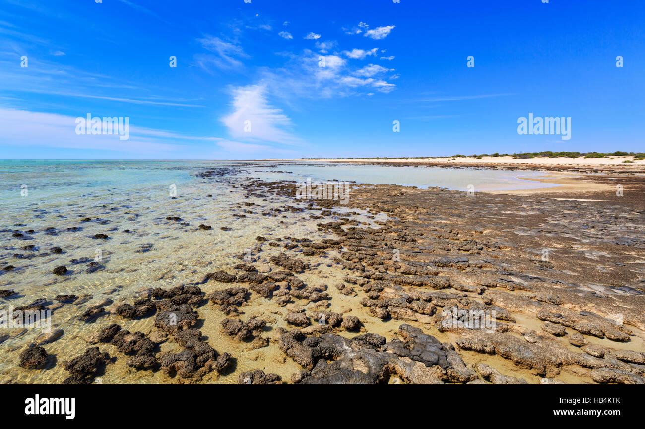 Die stromatolithen bei Hamelin Pool Marine Nature Reserve. Shark Bay Stockbild