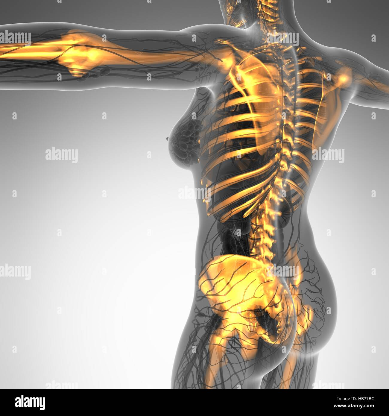 Back Pain Science Stockfotos & Back Pain Science Bilder - Seite 12 ...