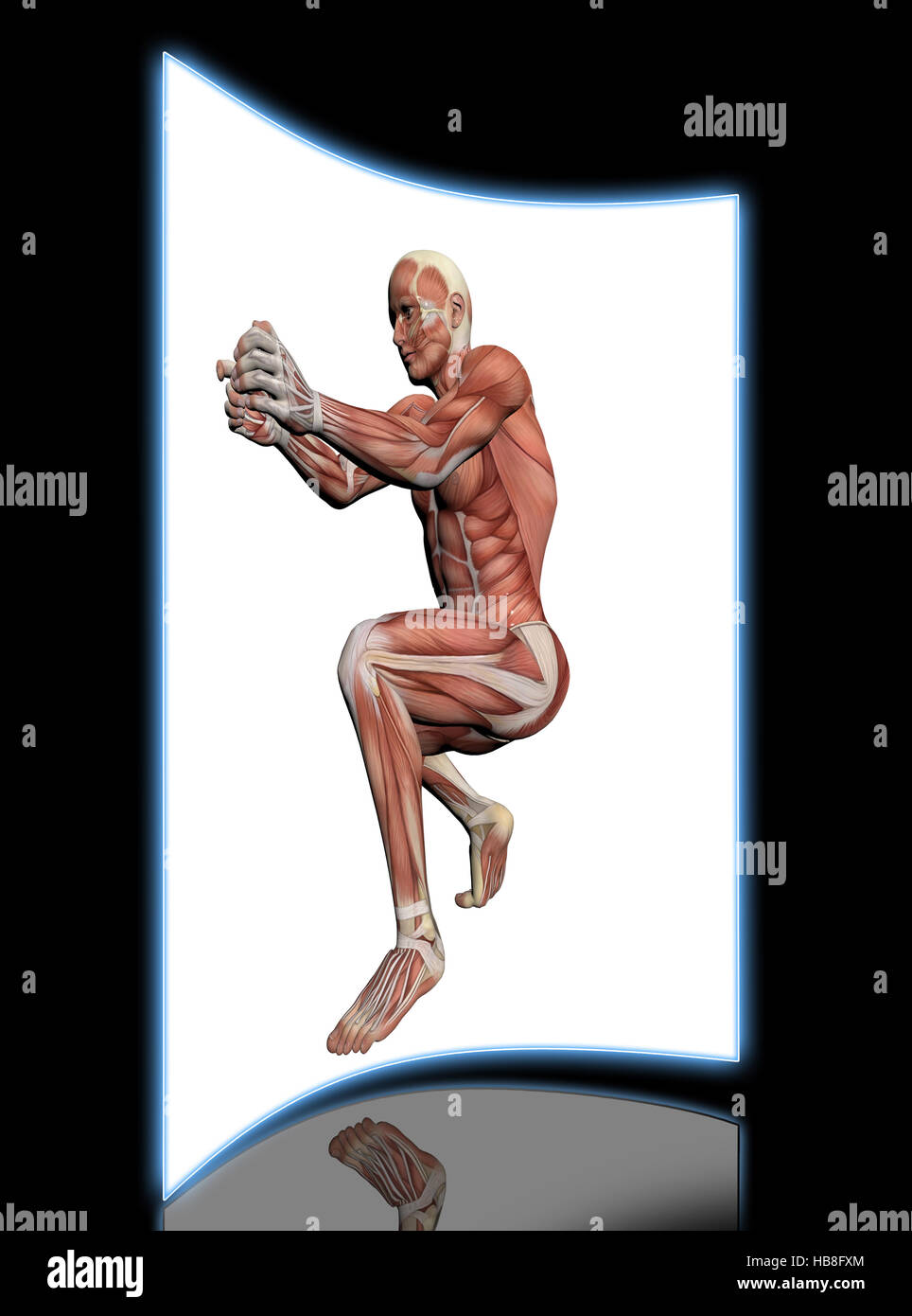 Menschliche Anatomie-männliche Muskeln Stockfoto, Bild: 127421916 ...