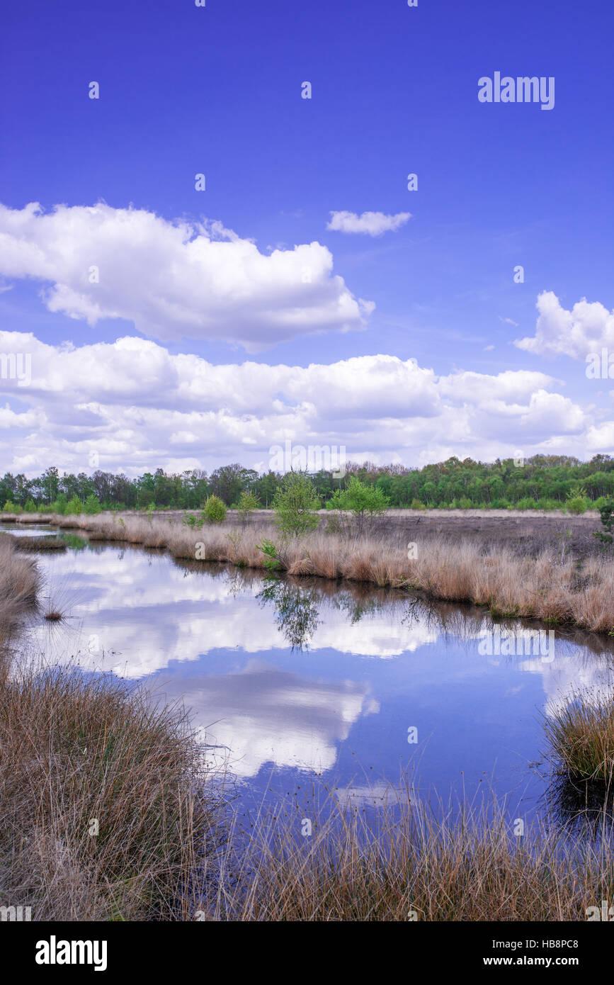 Moorlandschaft Stockfoto