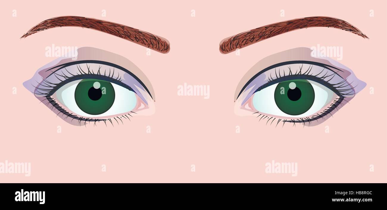 Grüne Augen Mit Blauen Lidschatten Vektor Abbildung Bild