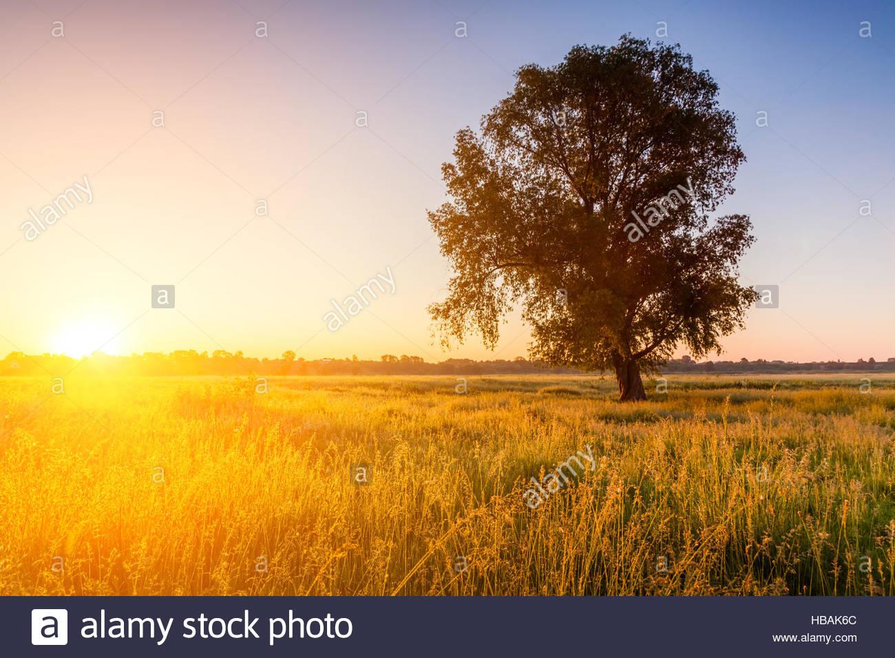 Einsamer Baum auf Feld im Morgengrauen Stockbild
