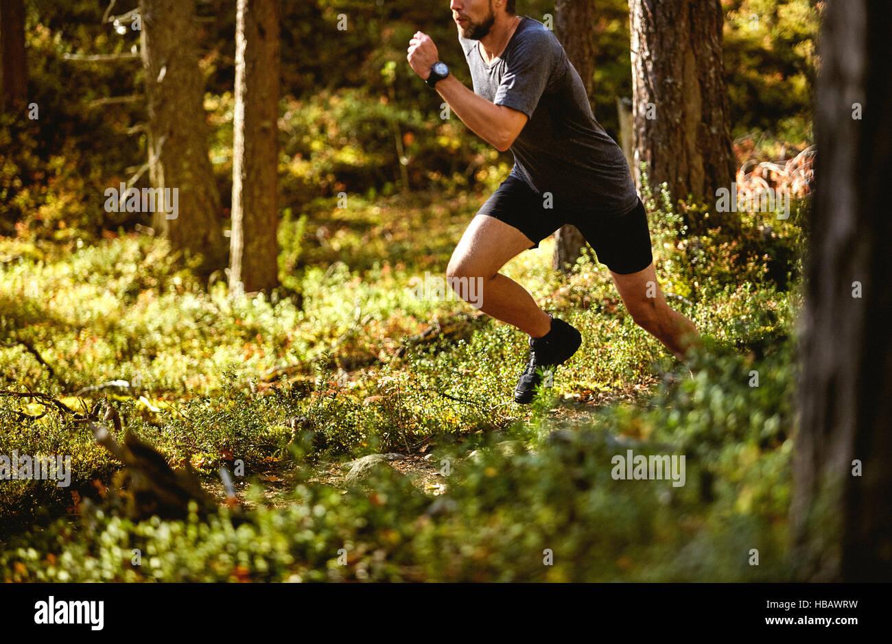 Mann läuft in Wald, Keimiotunturi, Lappland, Finnland Stockbild