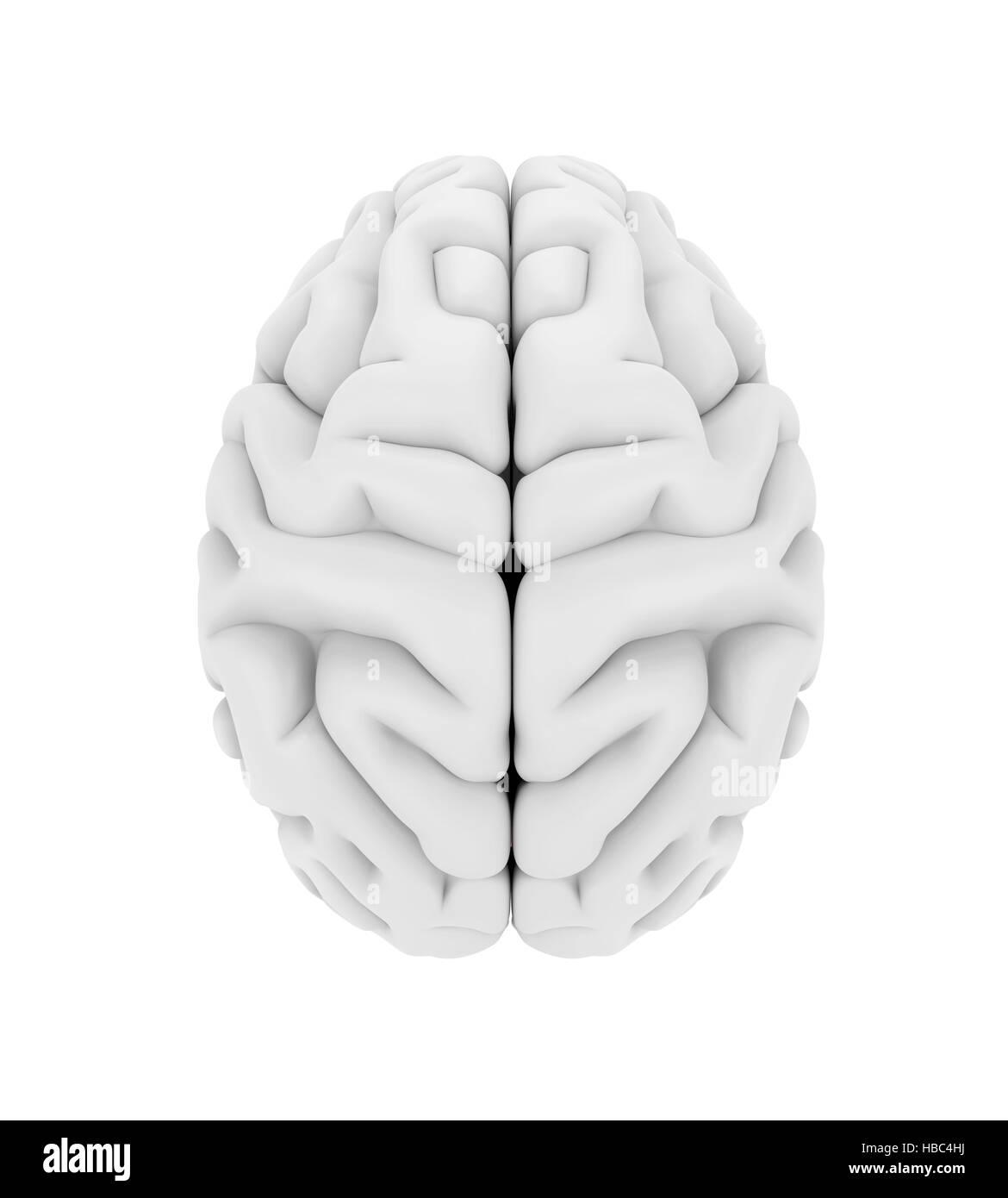 Left Right Human Brain Stockfotos & Left Right Human Brain Bilder ...