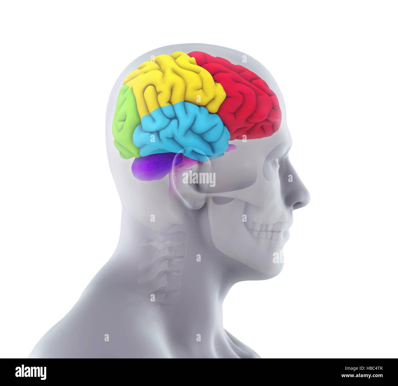 Mri Of Head Trauma Stockfotos & Mri Of Head Trauma Bilder - Alamy