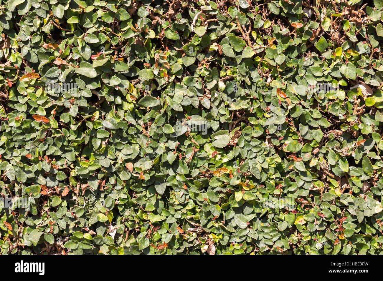 Fence Hedge Small Stockfotos & Fence Hedge Small Bilder - Alamy