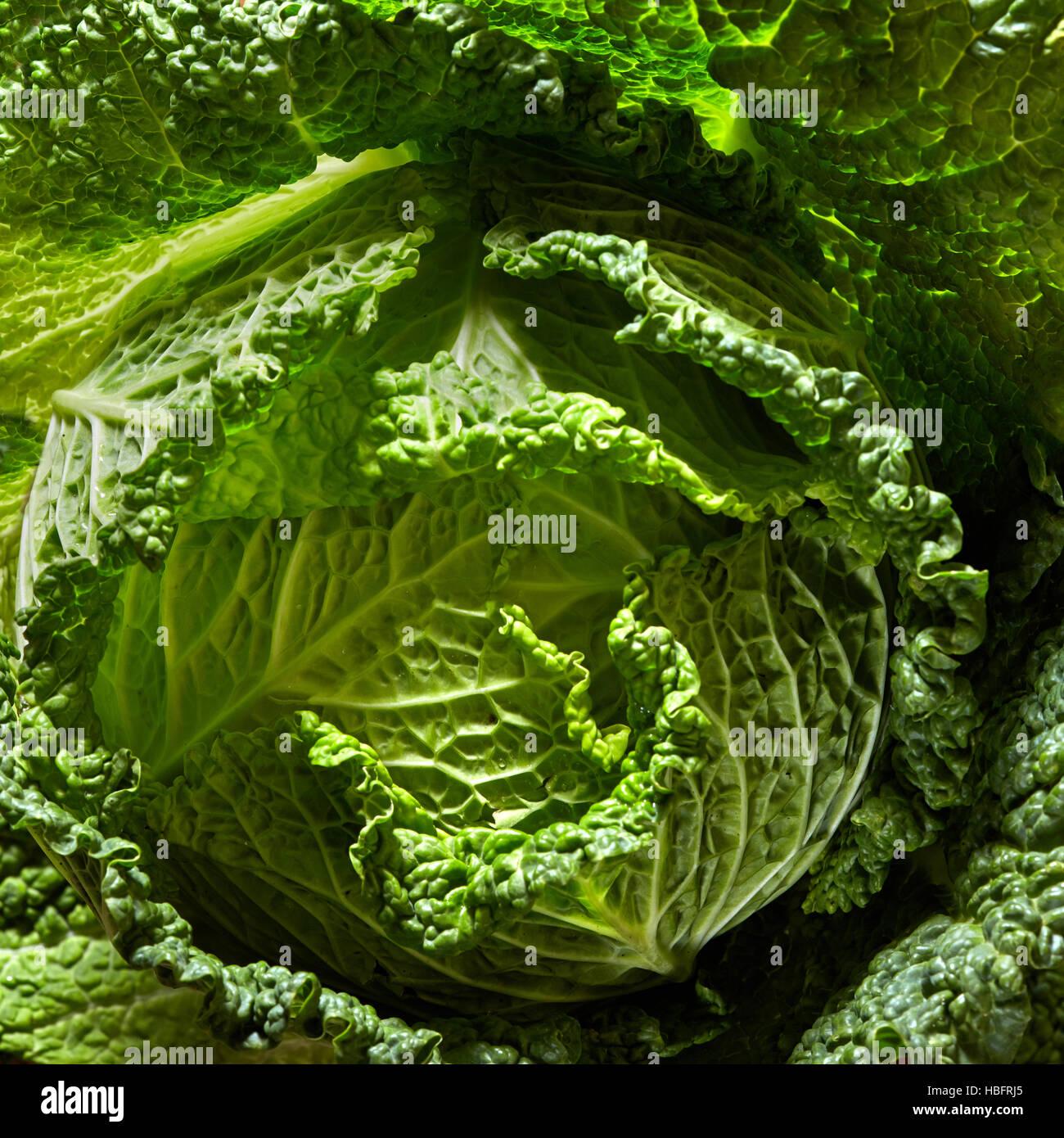 Savoy Cabbage Kopf Stockbild
