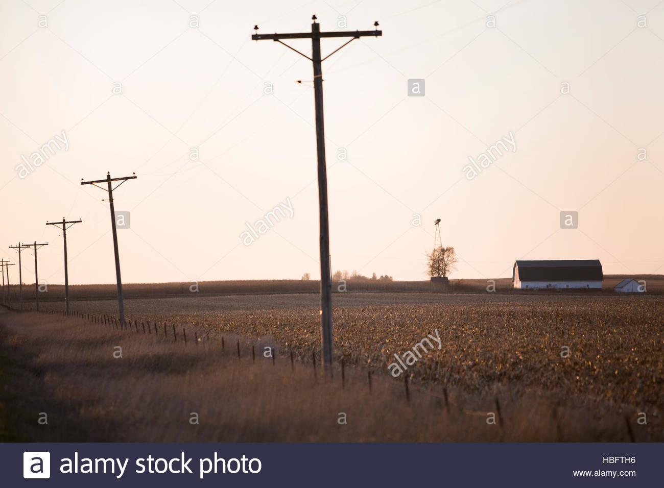 Ein Maisfeld in Iowa. Stockbild