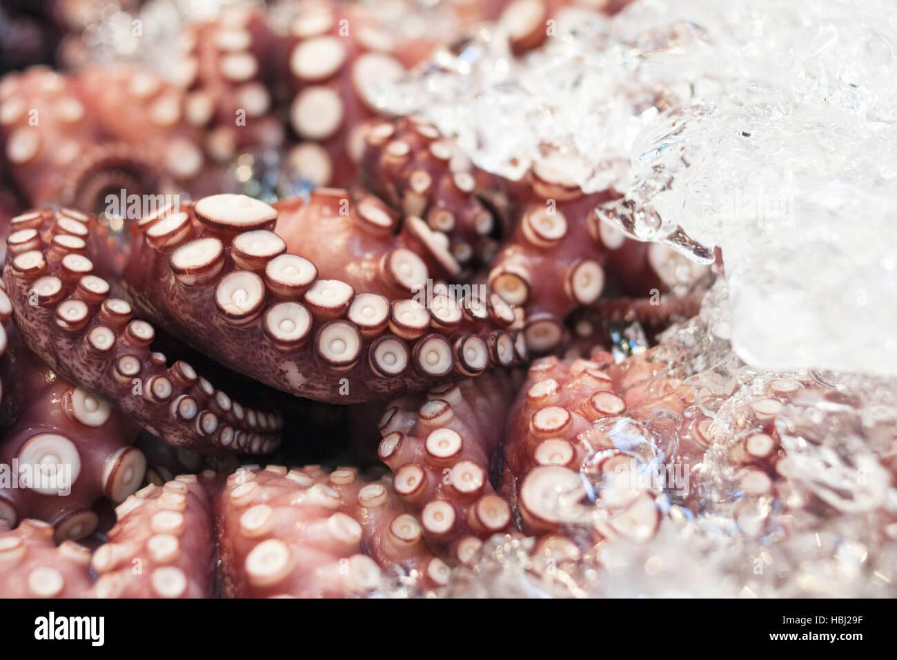 Charmant Tintenfisch Färbung Blatt Fotos - Druckbare Malvorlagen ...