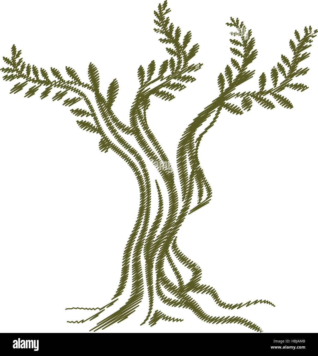 baum olivenzweig skizze symbol vektor illustration eps 10 vektor