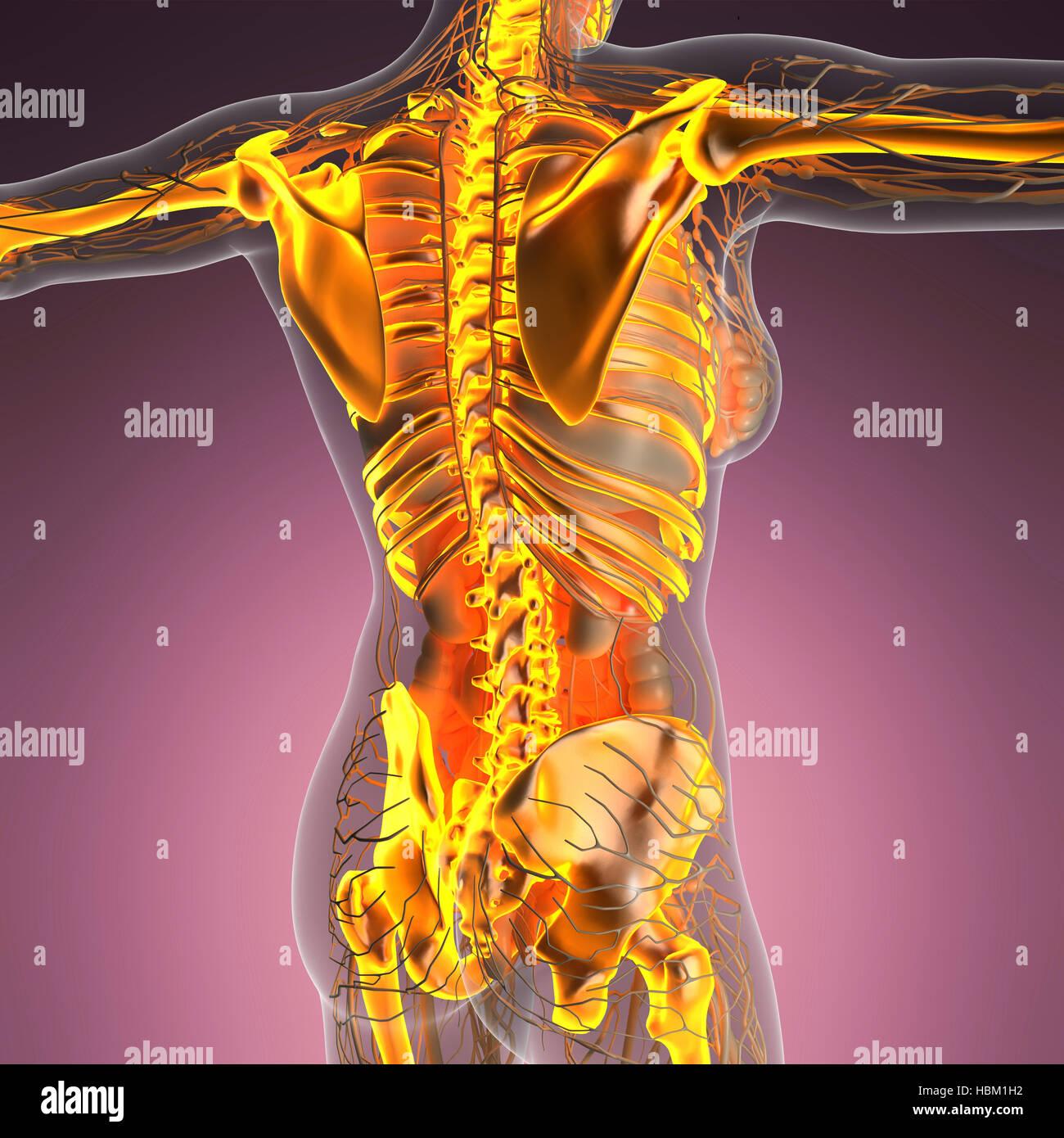 Atemberaubend Bilder Des Menschlichen Körpers Bilder - Menschliche ...
