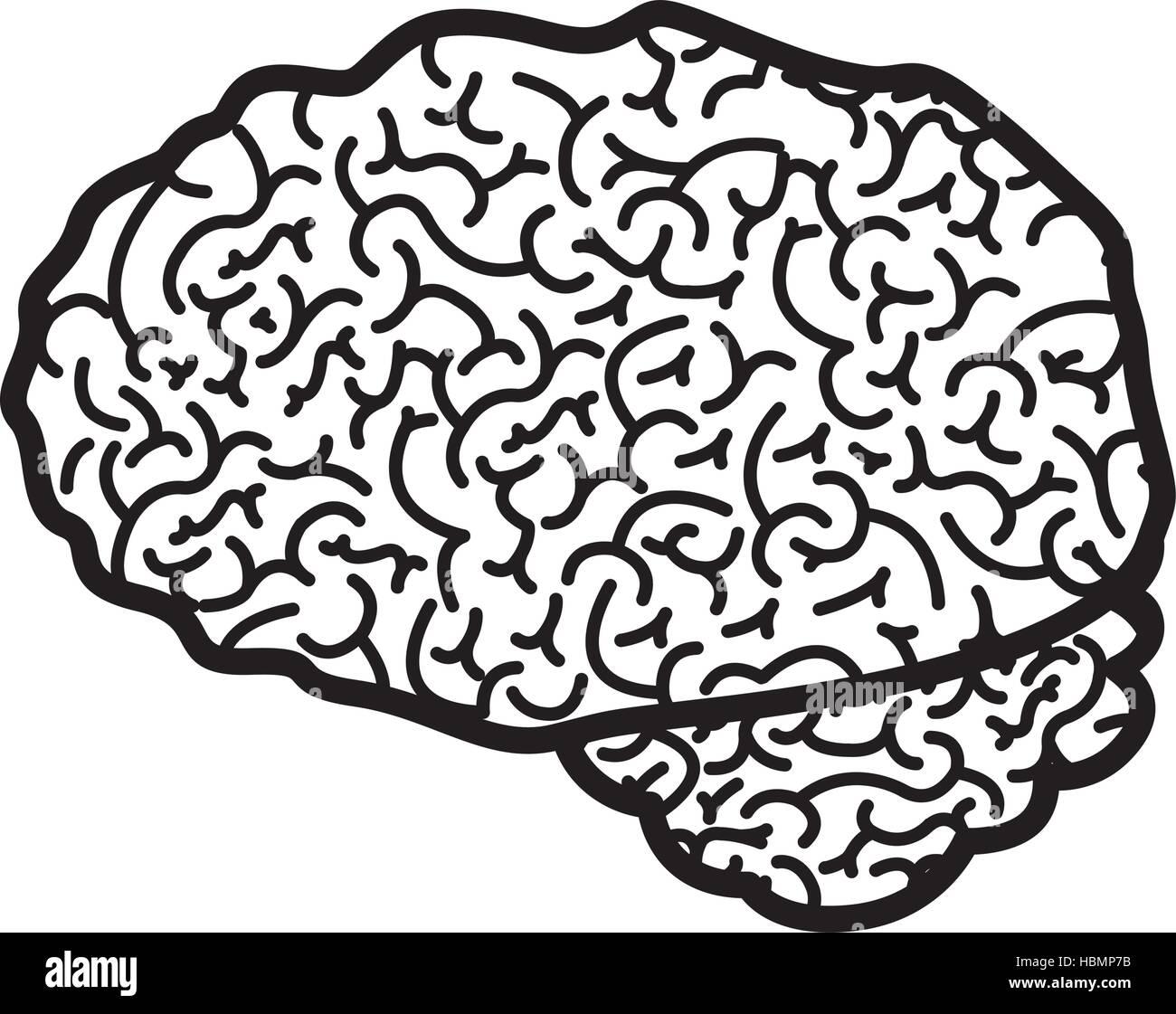 Brain Lobes Stockfotos & Brain Lobes Bilder - Seite 3 - Alamy