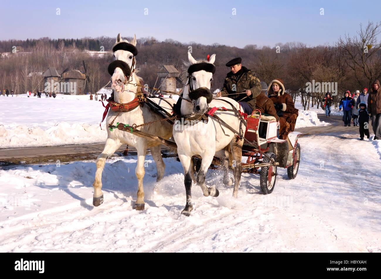 Zwei Weisse Pferde Zeichnen Menschen In Einem Wagen Fasching Feiern
