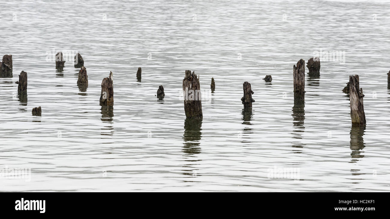 Alte Fundamente im Siuslaw River, Florence, Oregon. Stockbild