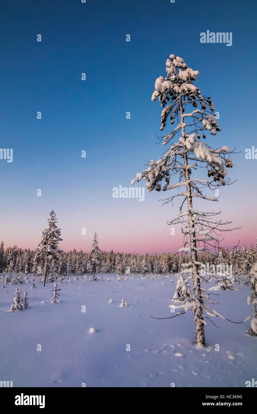 Winter im Nationalpark Syöte, Finnland. Stockbild