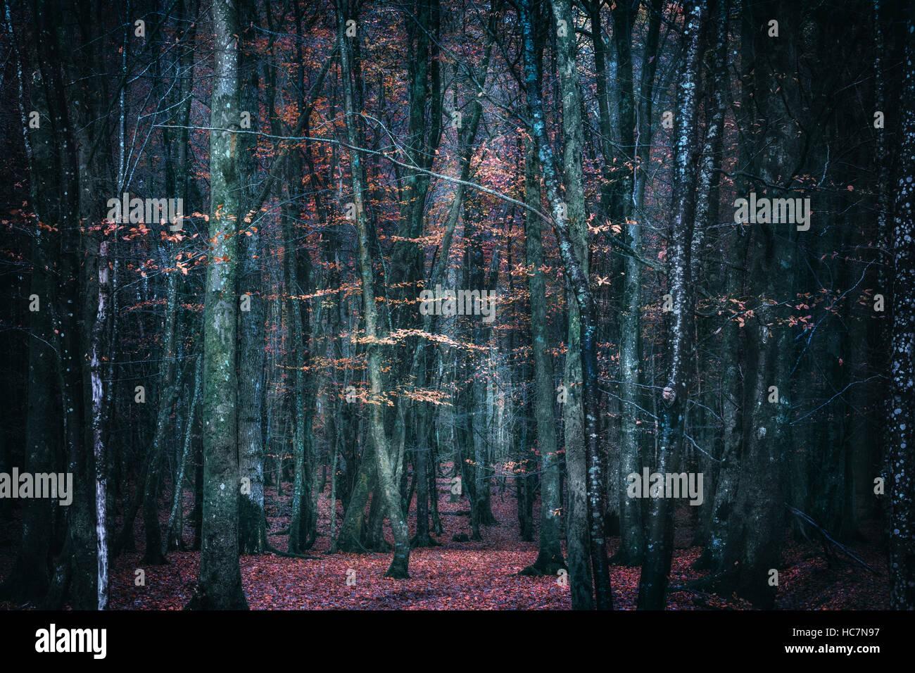 geheimnisvollen dunklen Wald im Herbst Stockfoto