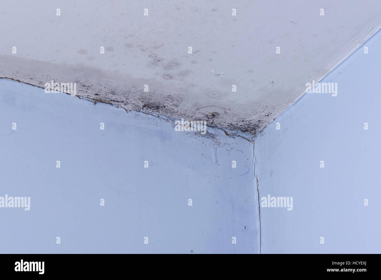 Schwarzer Schimmel an den Wänden und der Decke eines Raumes Stockbild
