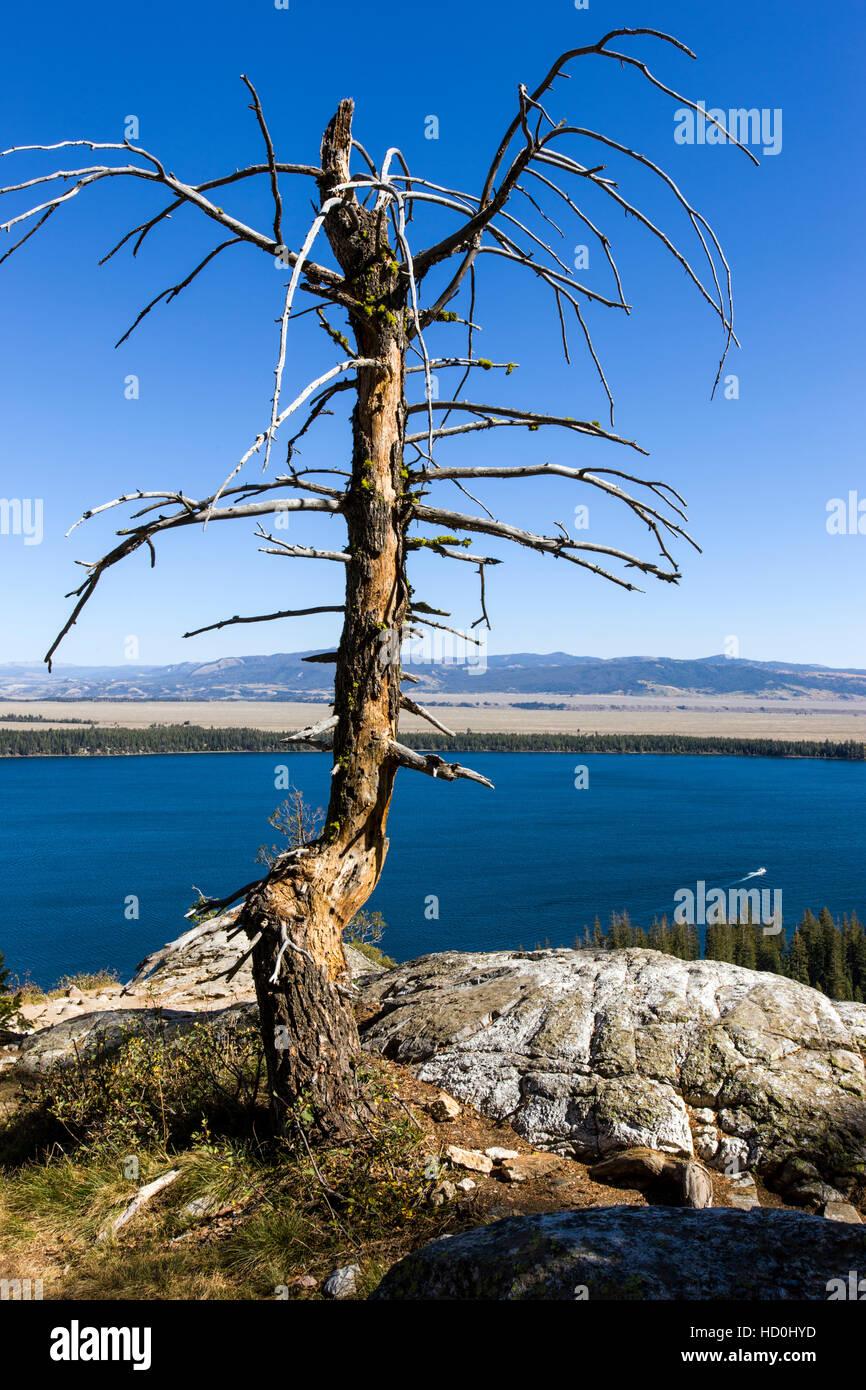 Alten Baum Rahmen Jenny Lake, Inspiration Point, Cascade Canyon ...